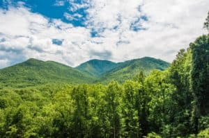View of the green trees in the Smoky Mountains
